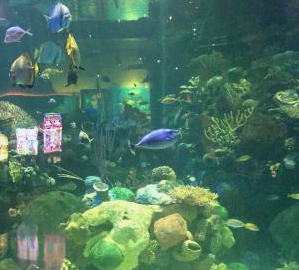 silverton-aquarium